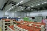 Kho lạnh bảo quản rau củ quả - Giải pháp đảm bảo độ tươi ngon cho thực phẩm