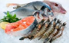 Kho đông lạnh hải sản và những điều cần biết