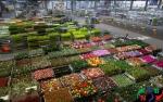 Báo giá kho lạnh bảo quản hoa tươi